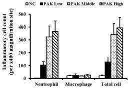 급성폐렴 마우스 모델에서 녹농균에 의한 neutrophil 증가