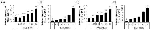 녹농균에 특이적으로 감염된 A549 세포에서 Muc7, Muc13, Muc15, Muc19의 MOI 의존적 증가 mRNA level에서 real-time PCR 로 확인