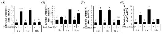 녹농균에 특이적으로 감염된 A549 세포에서 Muc7, Muc13, Muc15, Muc19의 시간 의존적 증가 mRNA level에서 real-time PCR로 확인