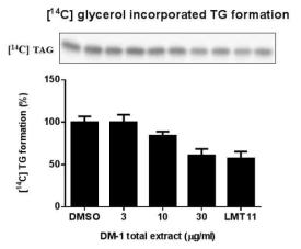 황칠나무 잎 추출물의 TG 농도의존적 저해활성 결과