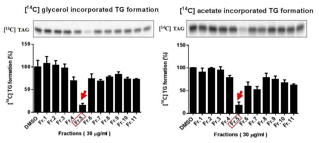 Lipid profile analyzed by TLC using either [14C] glycerol (A) or [14C] acetate (B) as radiolabeled substrates. Relative percentage of vehicle control represents was shown as a graph