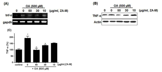 Effect of ZA-M on OA-induced TNF-α production. (A and B) Expression of TNF- α was confirmed by RT-PCR and western blot, respectively. (C) The cell-free supernatants were collected and analyzed for TNF-α production by ELISA. The bar graphs show the mean ± S.D. of 3 independent experiments (*p< 0.05, **p< 0.01, and ***p< 0.001 compared with the DMSO control; *p< 0.05, **p< 0.01, and ***p< 0.001 compared with the OA treated control)