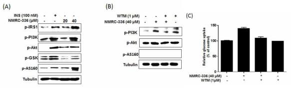 NMRC-336의 인슐린수용체 이하 AKT 경로 활성화 확인
