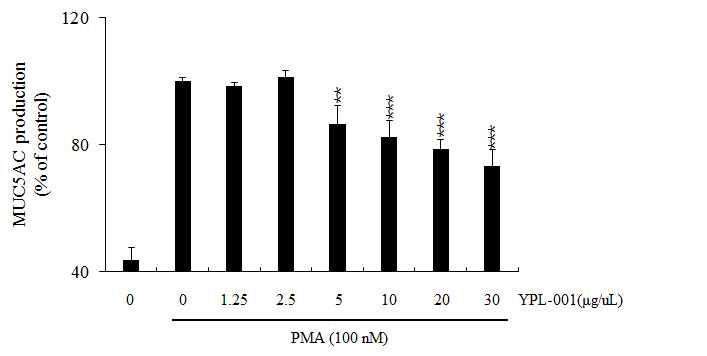 천연물 신약 YPL-001에 의한 PMA에 유도된 MUC5AC 분비량의 저해 효과