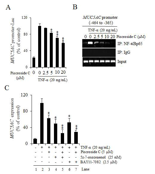 Inhibitory effects of piscroside C on TNF-α-activated NF-κB activity. (A) The inhibitory effect of piscroside C on MUC5ACtranscription was assayed using a luciferase reporter gene driven by the MUC5AC promoter (NCI-H292/MUC5AC promoter-Luc) in NCI-H292 cells. For each concentration of piscroside C, cells were pre-treated for 2 h, then TNF-α(20 ng/mL) was added and incubated continued for 16 h (*p< 0.05, **p< 0.01, and ***p< 0.001). (B) Reduced binding of NF-κB to the MUC5AC promoter by piscroside C was determined by ChIP using anti-NF-κBp65 antibody. Primers for PCR were designed to identify the NF-κB binding sites within the MUC5ACp romoter region (-464 to -365). NCI-H292 cells were pre-treated with each indicated concentration of piscroside C for 2 h and then treated with TNF-α(20 ng/mL) for 30 min. Rabbit IgG served as a negative control, and input samples (unprecipitated chromatin)served as positive controls for PCR amplification.(C) The effect of piscroside C combined with IKK (BAY11-7082) or TAK1 (5z-7-oxozeaenol) inhibitor on MUC5AC mRNA expression. RT-qPCR was performed in at least. Data means ± SD (; *p< 0.05, **p< 0.01, and ***p< 0.001 compared with the control, TNF-α, alone)
