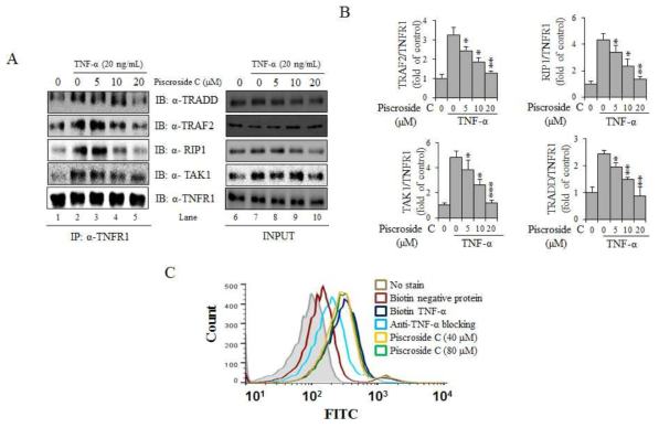 Inhibitory effect of piscroside C on TNF-RSC formation. (A) NCI-H292 cells were pre-treated with different concentrations of piscroside C for 2 h, exposed to with TNF-α(20 ng/mL) for 30 min, and then lysed for assays. The anti-TNFR1 antibody immunoprecipitates were immunoblotted (IB) with anti-TRADD, RIP1, TRAF2, TAK1 or TNFR1 antibodies;4% of the whole cell extract for IP was used for input.Protein bands were detected by a LAS-4000 imager. (B) The quantification of immunoreactive band was determined bydFujisoftware normalized to TNFR1 intensity. Data means (± SD, ) of at least (*p< 0.05, **p< 0.01, and ***p< 0.001 compared with the control, TNF-α, alone). (C)Piscroside C had no inhibitory effects on the binding between TNF-α and its receptor, TNFR1. Extracellular interaction between TNF-α ligand and its receptor, TNFR1 (deep blue line) was not affected by the addition of piscroside C (yellow and green line). H292 cells were incubated with biotin-labeled human TNF-α, followed by fluorescein isothiocyanate-labeled streptavidin. The cells were subjected to FACS analysis using FACSCanto II (BD Biosciences, San Jose, CA). The data were analyzed using FlowJo software (TreeStar, Ashland, OR). Negative control preparations were incubated with biotin-labeled soybean trypsin inhibitor (SBTI, red line) or anti-TNF-α antibody-bound TNF-α (light blue line), which does not bind to cell-surface proteins or TNFR1