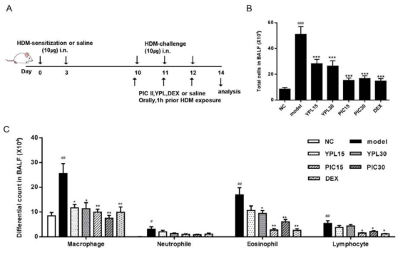 (A) A timeline of allergen sensitization, exposure, and drug treatment in this study (DEX; dexamethasone, i.n; intranasal). The total cells (B) and differential cells (C) in BALF of mice were collected at 48h after the last HDM challenge, and quantified in DiffQuick-stained reagent. NC; normal control mice treated with saline only, model; HDM-sensitized/challenged mice, YPL 15 and 30; YPL-001 (15 and 30 ㎎/㎏) + HDM-sensitized/challenged mice, PIC 15 and 30; picroside II (15 and 30 ㎎/㎏)+HDM-sensitized/challenged mice, DEX; dexamethasone + HDM-sensitized/challenged mice. All data are representative of three independent experiments and represented as the mean ± SEM (n=6 mice/group). #p<0.05,##p<0.01,and###p<0.001, compared with normal control (NC);*p<0.05, **p<0.01, and ***p<0.001, compared with model group