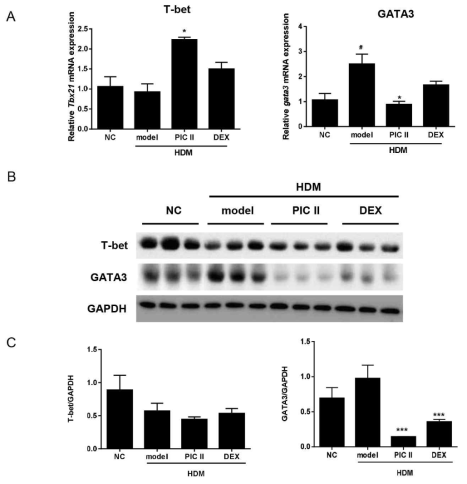 (A) T-bet and GATA3 mRNA expression were determined by real-time RT-PCR. The data were normalized toGapdh gene expression. (B) T-bet and GATA3 protein were analyzed by western blot. (C) The western blot was quantitated by ImageJ. The levels of T-bet and GATA3 were calculated over GAPDH. NC; normal control mice treated with saline only, model; HDM-sensitized/challenged mice, PIC II; picroside II (30㎎/㎏) + HDM-sensitized/challenged mice, DEX; dexamethasone + HDM-sensitized/challenged mice. All data are representative of three independent experiments and represented as the mean ± SEM (n=6mice/group). #p<0.05,compared with normal control (NC);*p<0.05 and ***p<0.001, compared with model group