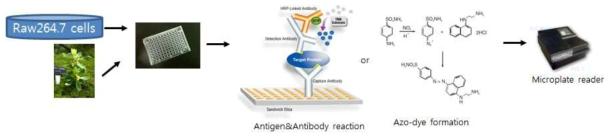 항염증 천연물 소재의 스크리닝 방법