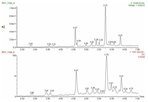 백서향 줄기 추출물의 UPLC-PDA-QTOF-MS 크로마토그램