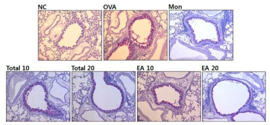 백서향 추출물과 분획물은 ovalbumin으로 유발된 천식마우스 기관지의 점액분비 억제 효과
