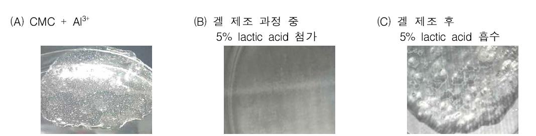 5% lactic acid를 첨가한 CMC + Al3+ 제조 하이드로겔의 형태 변화