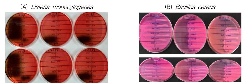Listeria monocytogenes(A)와 Bacillus cereus(B)에 대한 ε-polylysine, 자몽종자추출물과 감귤추출물의 최소저해농도(MICs) 확인
