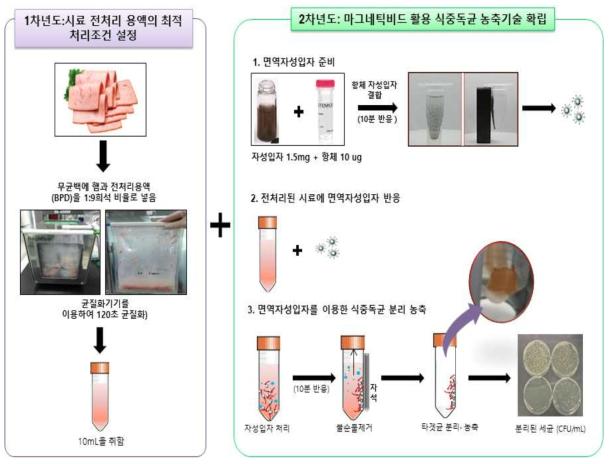 시료 전처리 조건 및 면역자성입자를 활용한 축산식품 중 식중독균 검출 모식도