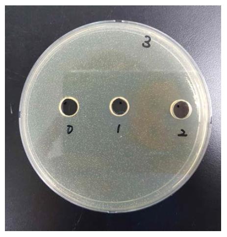 합성 펩타이드의 항리스테리아 특성