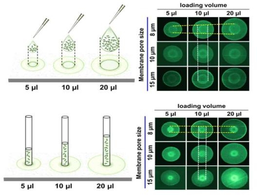 원형크로마토그래피 기반 파이펫 분주 방식과 모세관 튜브 분주 방식 결과