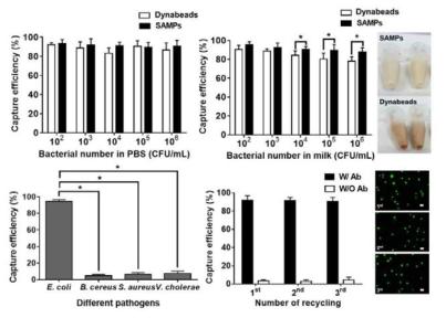 PBS buffer 및 우유에서의 면역 전분자성입자와 dyna bead의 목표균 분리·농축 효율 비교결과(상단), 면역 전분자성입자의 반응특이도 결과(좌측하단), 면역 전분자성입자의 재사용 효율(우측하단)