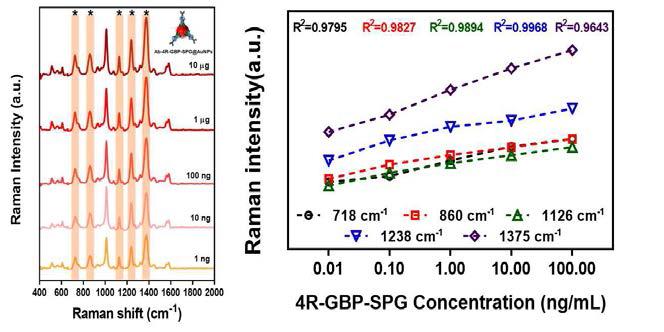 면역 금나노입자 융합단백질 4GBP-SPG 농도에 따른 SERS intensity 및 4GBP-SPG SERS 특정 peak 정량적 곡선