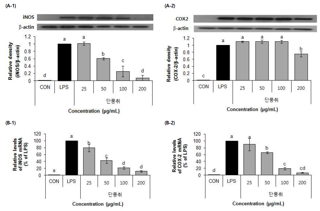 Effect of 70% EtOH extract of Danpungchwi (Ainsliaea acerifolia Sch. Bip.) on protein expressoin (A), mRNA expression (B)