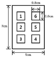 자외선 조사부위의 구획(가로 5cm × 세로 7 cm,=35㎠)
