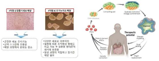 2차원적 세포배양과 3차원 배양의 장단점 및 임상적용 가능성