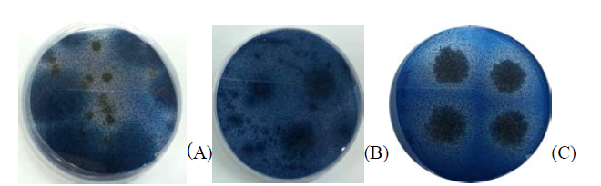 Clear zone formation and cell growth on agar plate. The clear zone is formed by chitosanase from microorganisms
