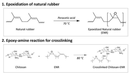 Synthesis route for chitosan-ENR