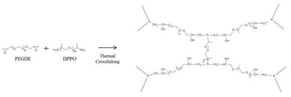 Thermal crosslinking between PEGDE-DPPO