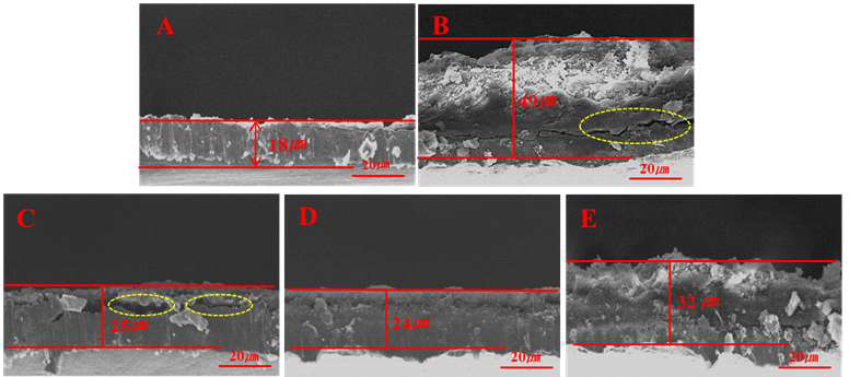 SEM images of cross-sectional anodes upon cycling: A. as prepared electrode; B. with cGPE 1000-400; C. with cGPE 1000-4000; D. with cGPE 2000-4000; E. with PE separator-LE after 100 cycles,respectively