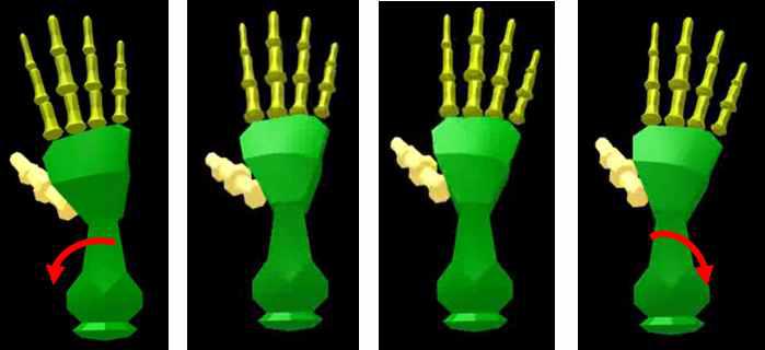손목 움직임 3D modeling 결과