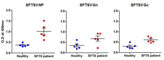 SFTSV NP, Gn, Gc 단백에 대한 IgG 항체반응 비교