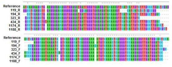 RT-PCR을 통해 증폭된 핵산이 SFTSV S segment 염기서열임을 확인함