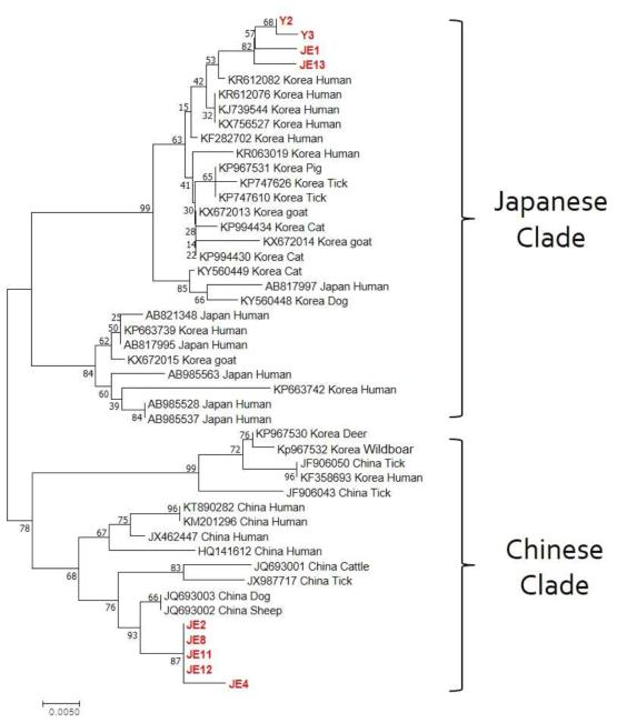 진드기에서 확인된 SFTSV 유전자 염기서열정보를 이용한 계통발생학적인 분석