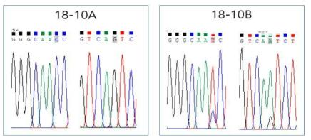 동일한 환자 혈청샘플에서 분리된 single virus에 대한 nucleotide sequence peak 값 비교 분석