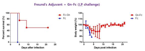 Freund's adjuvant가 혼합된 Gn-Fc로 면역한 실험동물모델에서 SFTSV 감염 후, 생존율(좌)과 체중변화(우)