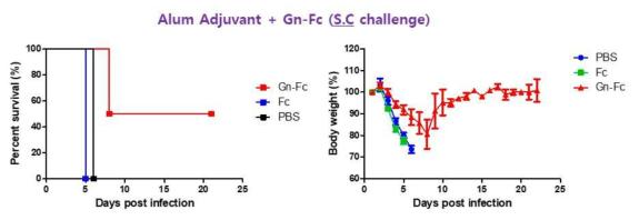Alum adjuvant가 혼합된 Gn-Fc로 면역한 실험동물모델에서 SFTSV 감염 후, 생존율(좌)과 체중변화(우)