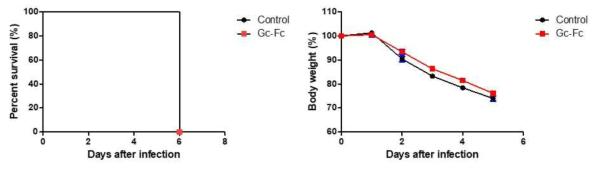 Alum adjuvant가 혼합된 Gc-Fc로 면역한 실험동물모델에서 SFTSV 감염 후, 생존율(좌)과 체중변화(우)