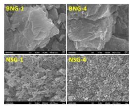 보론과 질소가 도핑된 BNG와 질소와 황이 도핑된 NSG의 몰폴로지