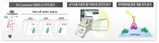 다양한 분석법을 활용한 인체 유래 줄기세포의 특성 확인
