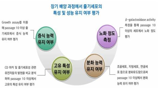 장기 배양 과정에서 줄기세포의 특성 및 성능 유지 여부 평가 모식도