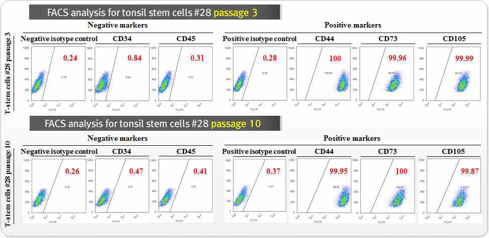 FACS analysis를 기반으로 다양한 마커 분석을 통한 편도 줄기세포의 특성 확인