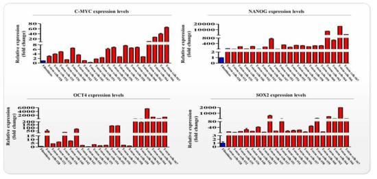 다양한 유전자 분석을 통한 분석을 통한 편도 줄기세포의 줄기세포성 확인